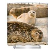 Seal 3 Shower Curtain