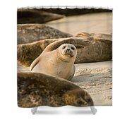 Seal 4 Shower Curtain