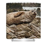 Seal Old Timers Shower Curtain