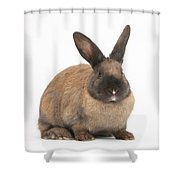 Seal-point Rabbit Shower Curtain