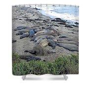 Seal Spa. Sand Bath Shower Curtain