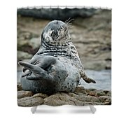 Seal Stretch Shower Curtain