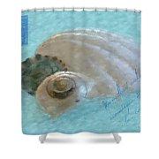 Seashells In Aqua Shower Curtain