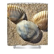 Seashells V2 Shower Curtain