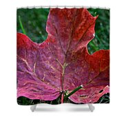 Seasonal Changes Shower Curtain