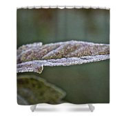 Seasonal Frost Shower Curtain