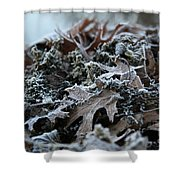 Seaweed And Oak Leaves Shower Curtain
