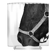 Secrets And Whispers Shower Curtain