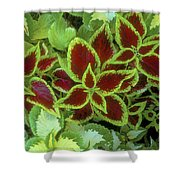 Sedona Floral Shower Curtain