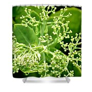 Sedum Droplets Shower Curtain