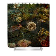 See Of Fossil Three Shower Curtain