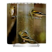 Seed Eating Song Birds Shower Curtain