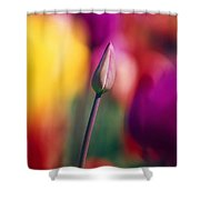 Selective Focus Tulip Flower Field Shower Curtain