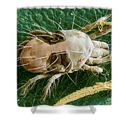 Sem Of Two-spotted Spider Mite Shower Curtain