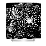 Sempervivum Shower Curtain