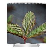 Sensitive Shower Curtain