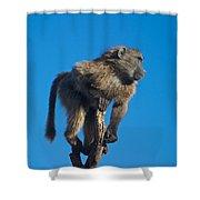 Sentry Baboon Namibia Shower Curtain