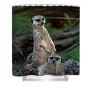 Sentry Shower Curtain by Skip Willits