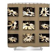 Sepia Daisy Flower Series Shower Curtain by Sumit Mehndiratta