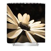 Sepia Daisy Flower Shower Curtain