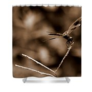 Sepia Dragonfly Shower Curtain