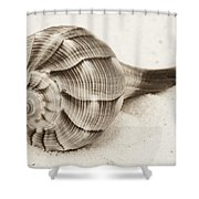 Sepia Shell Shower Curtain