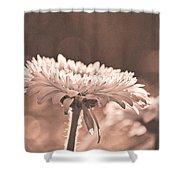 Sepia Sweetness Shower Curtain