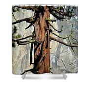 Sequoia And El Capitan Shower Curtain