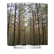 Serene Forest Shower Curtain