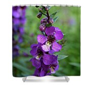 Serenita Purple Shower Curtain