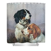 Setters On A Moor Shower Curtain by Colin Graeme