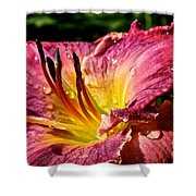 Seven Seals Daylily Shower Curtain