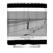 Shackleford Banks Ancient Forest  Shower Curtain