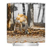 Shaded Grazing Shower Curtain