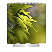 Shades Of Green And Gold. Shower Curtain