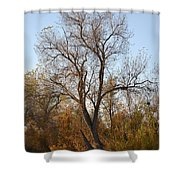 Shadow Cliff Tree Shower Curtain