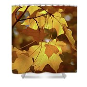Shadow Dancing Leaves Shower Curtain
