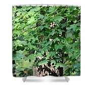 Shadows Of The Sweet Gum Shower Curtain