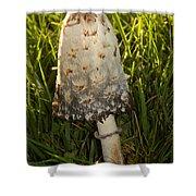 Shaggy Mane Mushroom Growing Shower Curtain