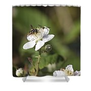 Sharing A Bud Shower Curtain