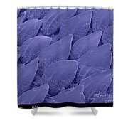 Shark Skin, Sem Shower Curtain