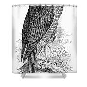 Sharp-shinned Hawk Shower Curtain