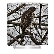 Sharp Shinned Hawk Shower Curtain