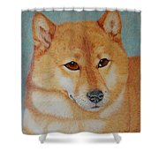 Sheba Inu  Shower Curtain