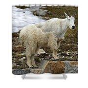 Shedding Mountain Goat Shower Curtain