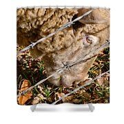 Sheep 1 Shower Curtain