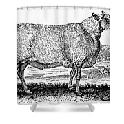 Sheep, C1800 Shower Curtain by Granger