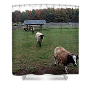Sheep Calling Shower Curtain
