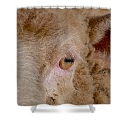 Sheep Close Up Shower Curtain