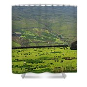 Sheep Graze In A Pasture In Swaledale Shower Curtain